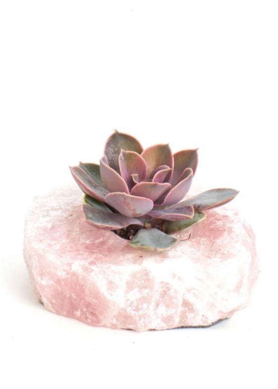 Quartzo Rosa- Suculenta
